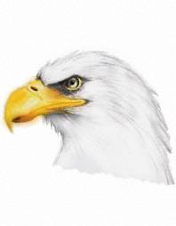 Eagle | ArchDes02 | Artwork | PENUP