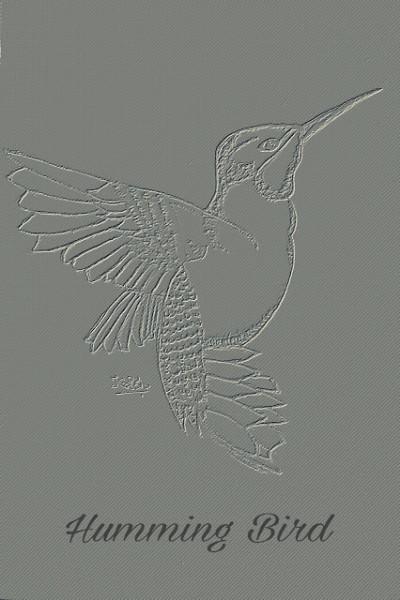 BEAUTIFUL BIRDS :: HUMMINGBIRD  | krish | Digital Drawing | PENUP