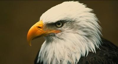 serious eagle  | Dash | Digital Drawing | PENUP
