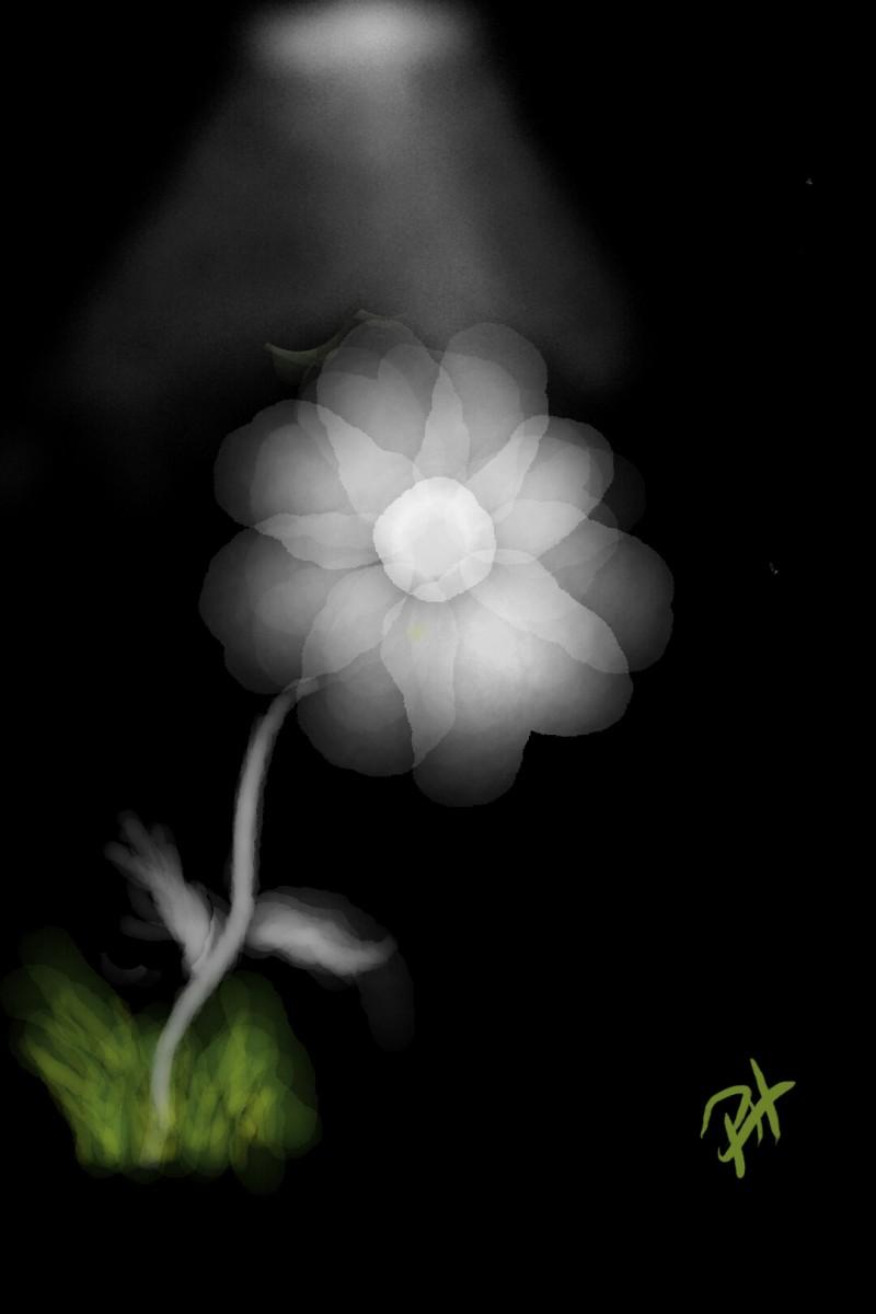 Flower Light   PhillipHanson   Artwork   PENUP