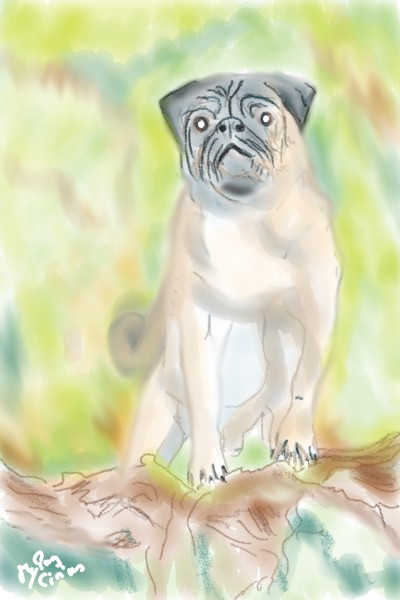 My Pug Cirius  | Rhyneptun | Digital Drawing | PENUP